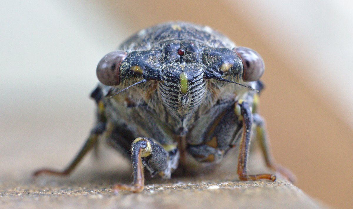 what we can learn from cicadas about growth